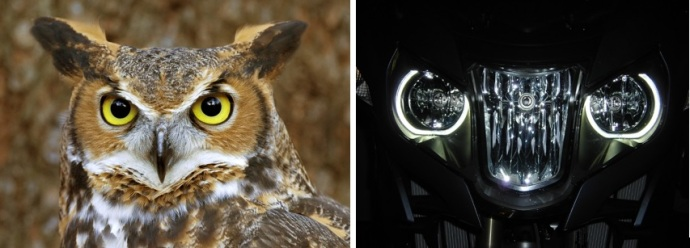 "This might give you an ideal of how the R1200RT got named ""The Owl""."